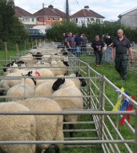 Llansawel Show, September 14th 2013: day out for the sheep